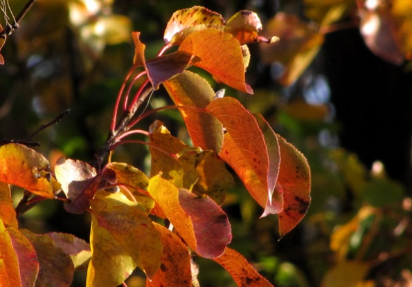 Leaves Nov 30