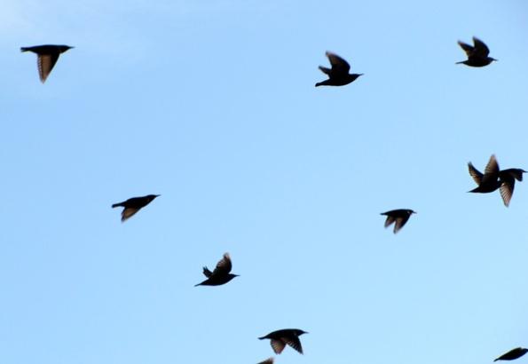 Birds Dec 9