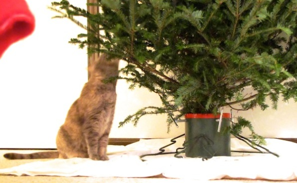 Cats with Tree Dec 15