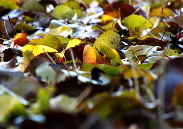December 4 Leaves