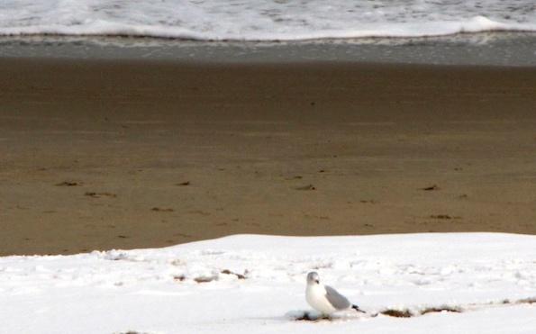 Birds Jan 26