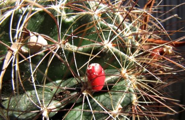 Cactus Jan 20