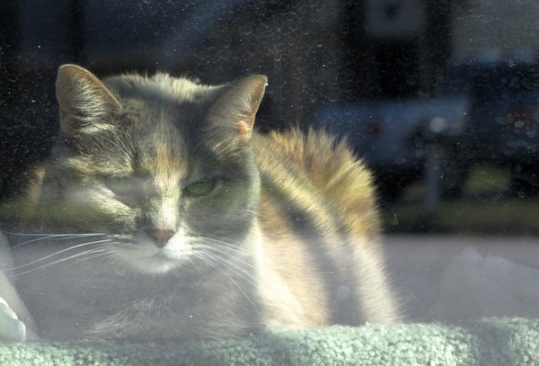 Cat Jan 20