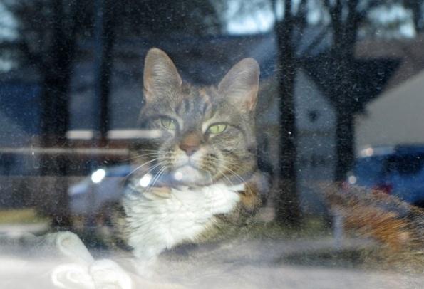 Cat Jan 7