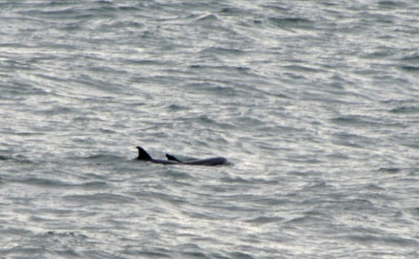 Dolphins Jan 26