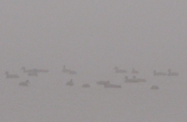 Ducks Jan 12