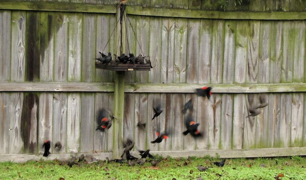 Flock Jan 17