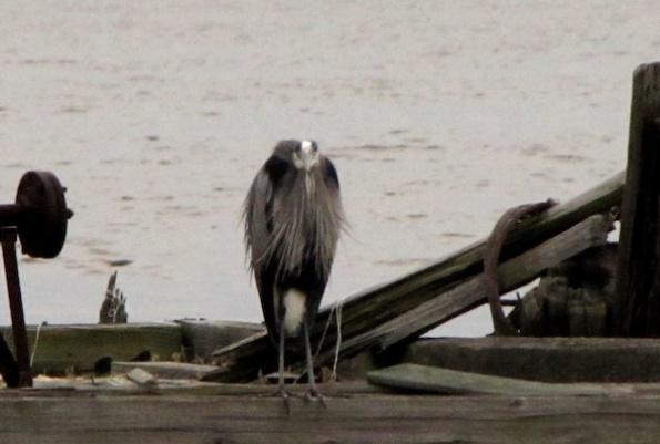 Heron Jan 1