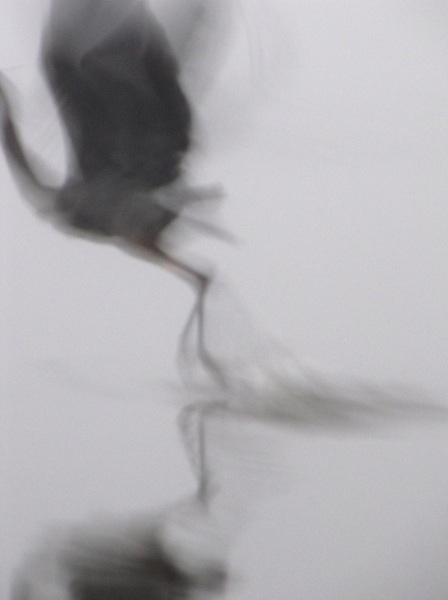 Heron Jan 12