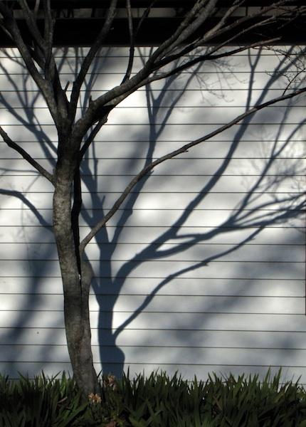 Shadows Jan 7