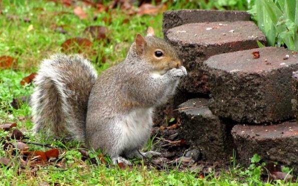 Squirrel Jan 17