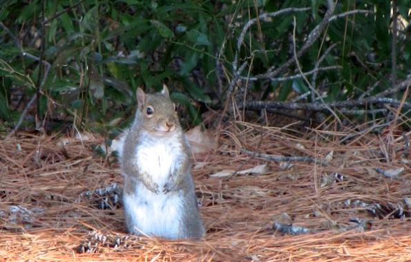 Squirrel Jan 21
