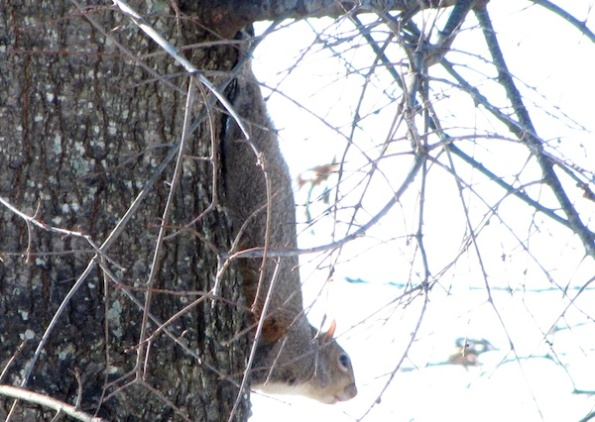 Squirrel Jan 7