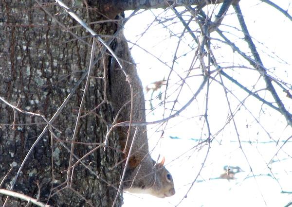 Squirrel Jan 7