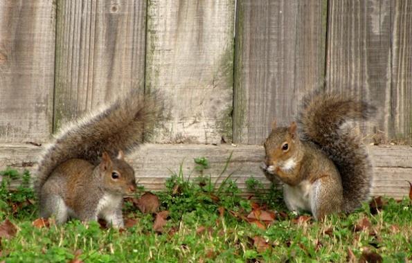 Squirrels Jan 13