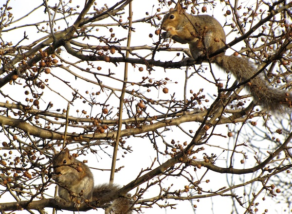 Squirrels Jan 13