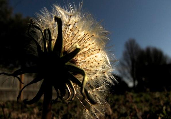 Sunshine Jan 29