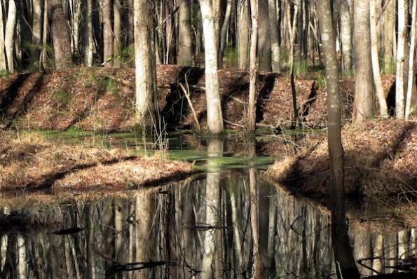 Trail Jan 19