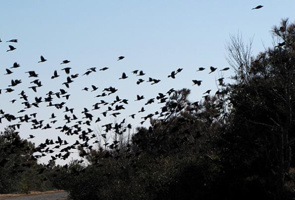 Flock Feb 6