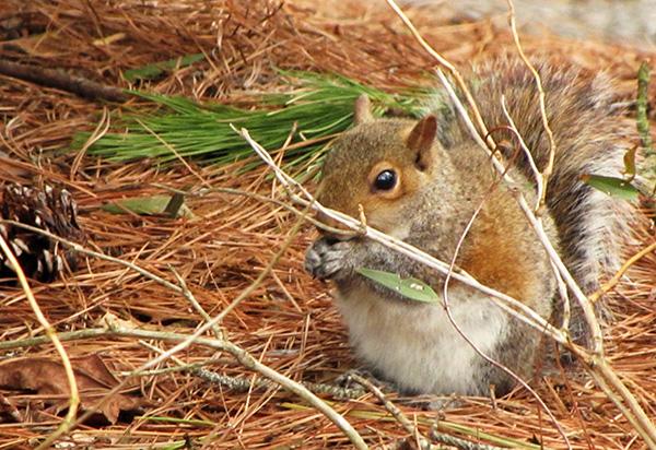 Squirrel Feb 22