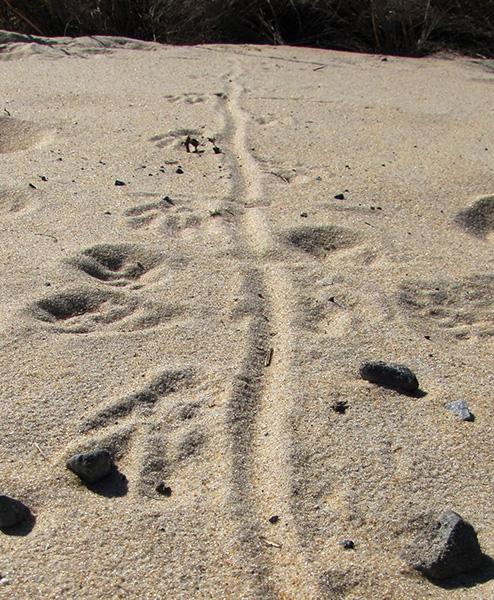 Tracks Feb 6
