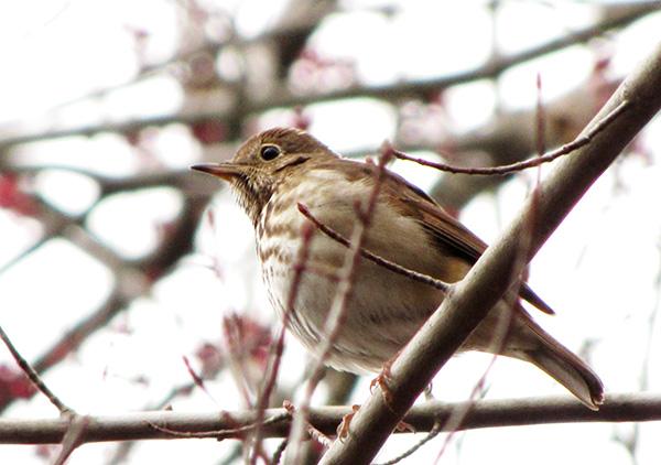Unknown Bird Feb 22