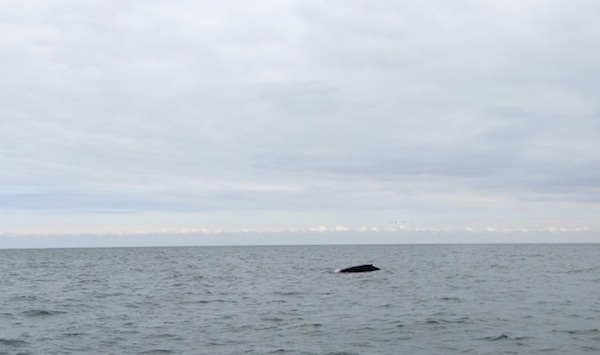 Whale Feb 3