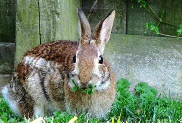 Rabbit March 30