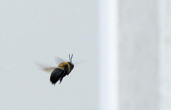 Bee April 12