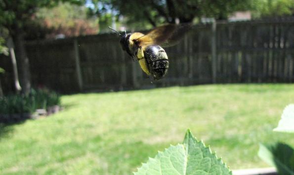 Bee April 18
