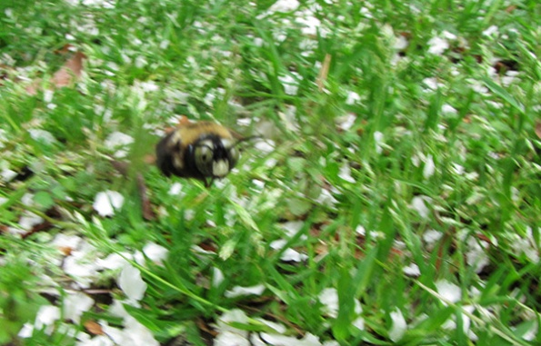 Bee Motion April 12
