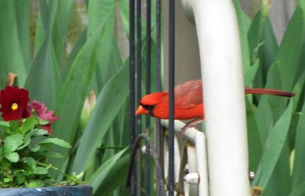 Cardinal April 19