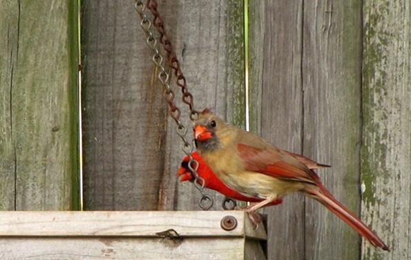 Cardinals April 30