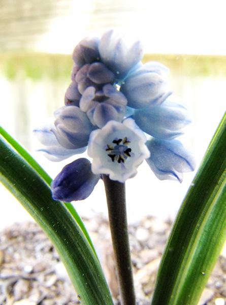 Flower April 10