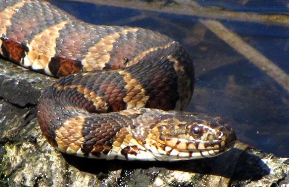 Snake April 7