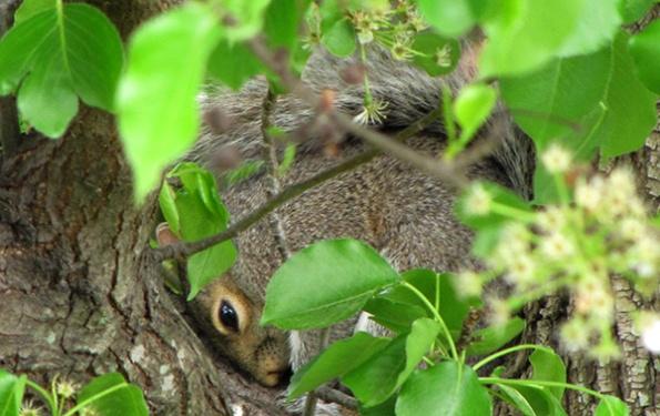 Squirrel April 19