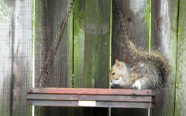 Squirrel April 29