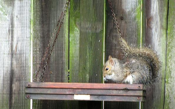 Squirrel April 29