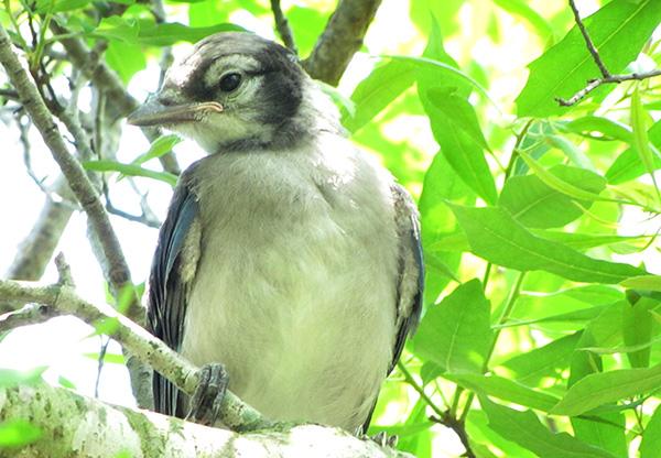 Blue Jays May 28