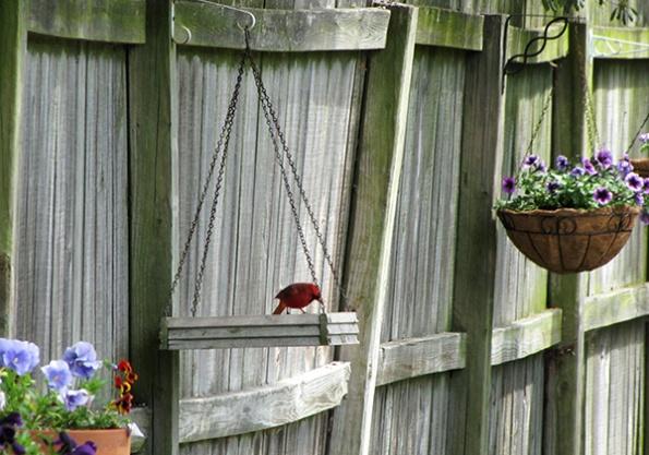 Cardinal May 2