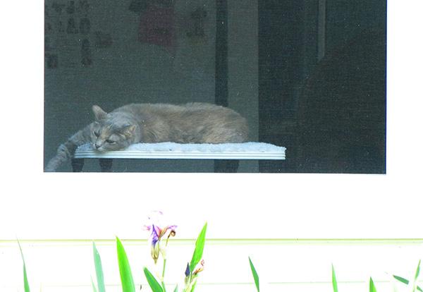 Cat May 15