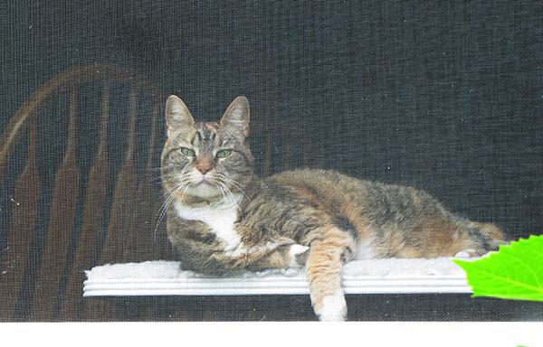 Cat May 9