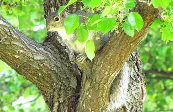 Squirrel April 24