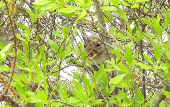 Squirrel May 1