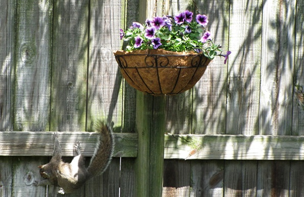 Squirrels May 2