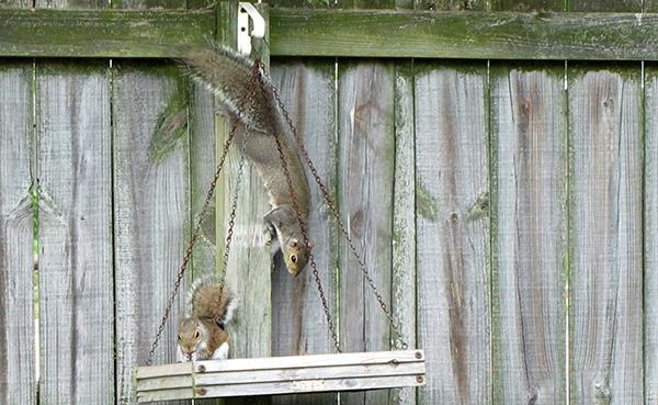 Squirrels May 9
