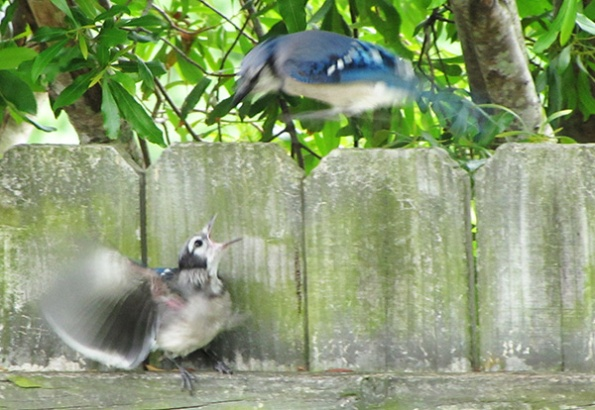 Blue Jays June 3