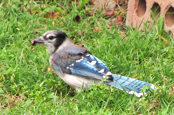 Blue Jays June 9