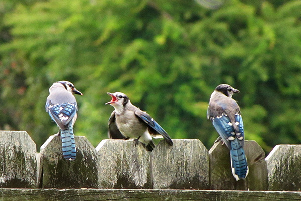 Blue Jays June 9