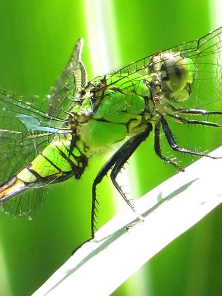 Dragonfly May 28